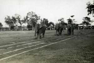 Indochina Laos Vientiane Natives Life Elephants old Amateur Snapshot Photo 1930