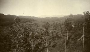 Indonesia Sumatra East Coast Rubber Estate Young Rubber Old Photo 1930