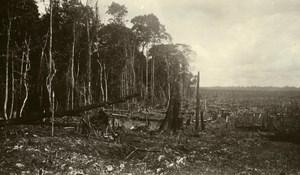 Indonesia Sumatra East Coast Rubber Estate Clearing Old Photo 1930