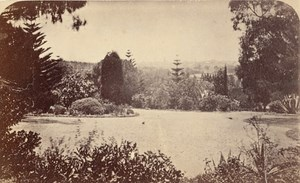 Melbourne Botanical Garden Australia old CDV Nettleton Photo 1870