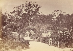 Melbourne Botanical Gardens Australia old CDV Nettleton Photo 1870