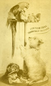 United Kingdom Greeting Card Parrot Dog Old CDV Photo 1870