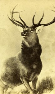 Monarch of the Glen par Sir Edwin Landseer Red deer CDV Photo of Painting 1865