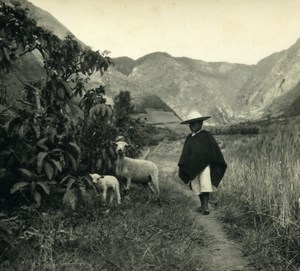 South America Ecuador Daily Life Scene Sheep Child Old Photo Beauvais 1960