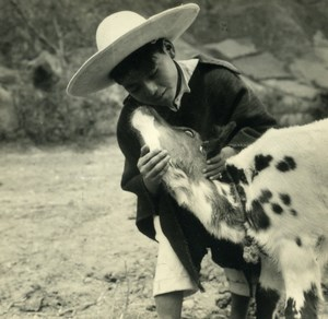 South America Ecuador Daily Life Scene Calf Child Old Photo Beauvais 1960