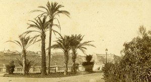 Monaco Palm Trees Old CDV Photo Davanne & Aleo 1870