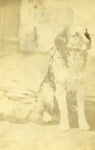France Cesson Mr Barraza's Dog Old Photo CDV 1870'