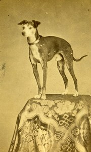 France Paris Slim Dog Portrait Old CDV Photo Ladrey 1870