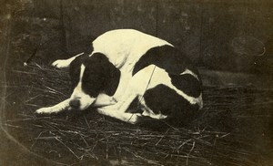 France Sleeping Dog Portrait Old Photo 1870