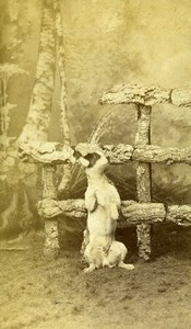 France Roubaix Posing Dog Portrait Old CDV Photo Nys 1880