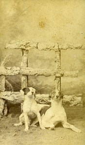 France Roubaix 2 Dogs Portrait Old CDV Photo Nys 1880