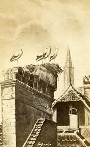 France Alsace Storks nest on Chimney Old Photo of Gravure 1870