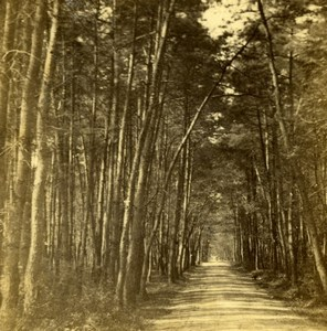 Tree and forest nature study Photograph 1860