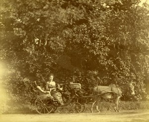 Donkey car lady sitting Unusual old Photo 19C