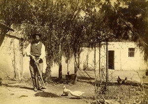 Farmer & duck Algeria farming old Photo 19C