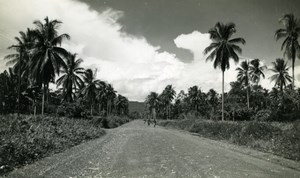 New Guinea scene, palm trees, road and people old Photo