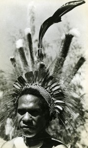 New Guinea native Feather Headdress Portrait old Photo 1940