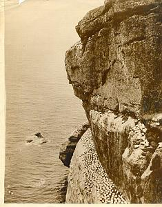 Bonaventure Island Sea gull Flock old Photo 1928