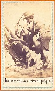 Indian picking Pulque, Mexico, old Merille CDV 1865'