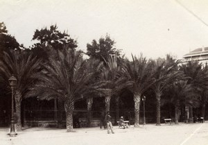 Algeria Algiers Garden Palm Trees Alger old Albumen Photo 1880'