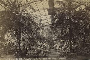 Germany Frankfurt tropical greenhouse Hertel Photo 1890
