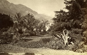 Monte Carlo Garden, Roquebrunne France old Photo 1880'