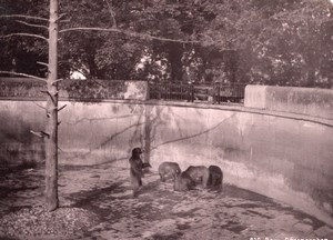 Bern Zoo Garden Bears Switzerland old Photo 1880'