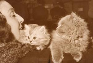 Feline Exhibition Persian cats Paris France Photo 1955'