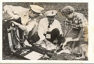 Scottisch Dog First Aid Bethesda USA old Photo 1953