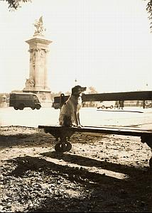 Dog on Bench Renault Truck Paris France old Photo 1953