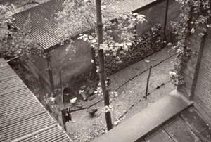 Courtyard Coal Chicken Paris Study Amateur Photo 1946