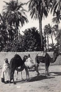 Algeria Bou Saada Oasis Life Camel Photo Prouho 1930