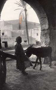 Algeria Bou Saada Oasis Life Donkey Photo Prouho 1930