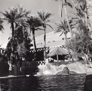Water Oasis Palm tree Beni Abbes Algeria old Photo 1940