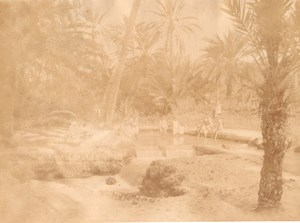 Nefta Oasis Water Tunisia old Garrigues Photo 1880