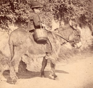 Nice Study of Boy on Donkey France old Photo 1870