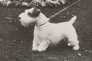 England London Dog Exhibition Old Photo 1930