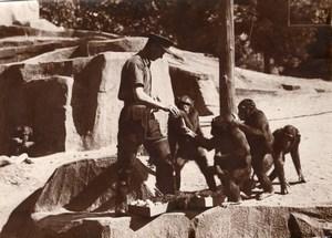 Monkeys Family Zoo Wildlife France Old Press Photo 1955