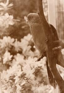 Parakeet Zoo Wildlife France Old Press Photo 1955