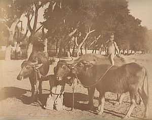 Buffalo & Nile Boat Cairo Egypt Bonfils 2 Photos 1880