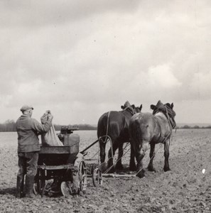 Farmworker Sowing Horse France Old Seeberger Photo 1930