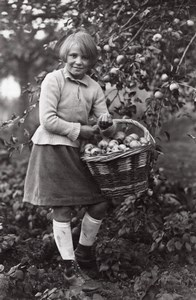 Apple Harvest Recolte des Pommes Seeberger Photo 1930