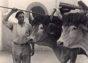 Ox Attelage Farm Worker France Old Seeberger Photo 1930