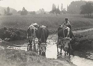 Cows Drinking Farm Worker France Seeberger Photo 1930