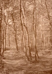 Romantic Forest scene near Paris Post War  Photo 1945