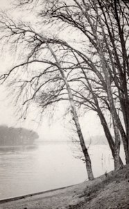 Romantic Trees Seine River Paris Post War Photo 1945