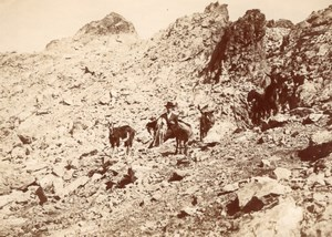 Parieres Shepherd Goat Berger Chevres Alpes Photo 1900