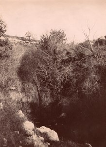Tuverende Pyrenees Montagne Nature Photo 1900