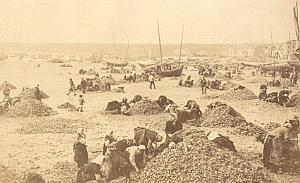 Cancale Oyster Harvest Women Beach Old Photo 1880