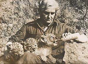 Lotte Walter Mother Lions Wild Life Zoo Old Photo 1954